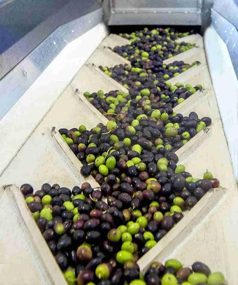olive macchina