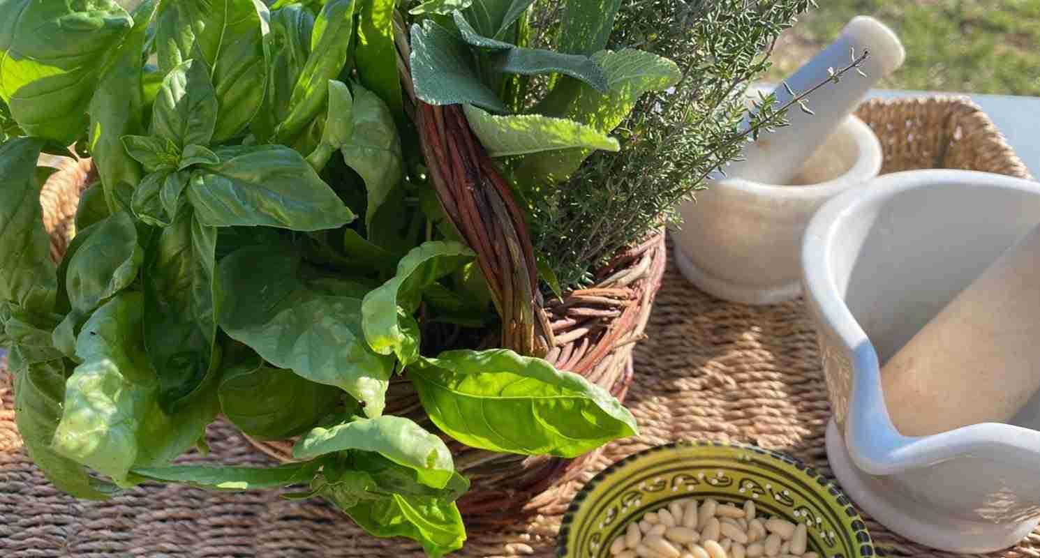 Pesto etrusco olea prilis
