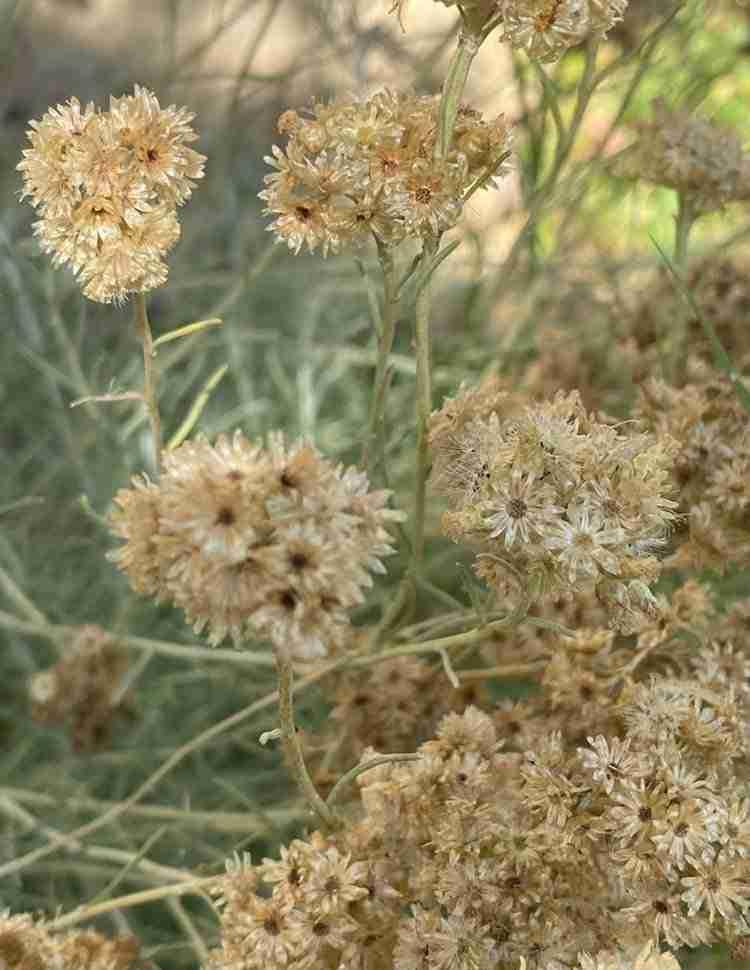 erbe aromatiche pesto olea prilis