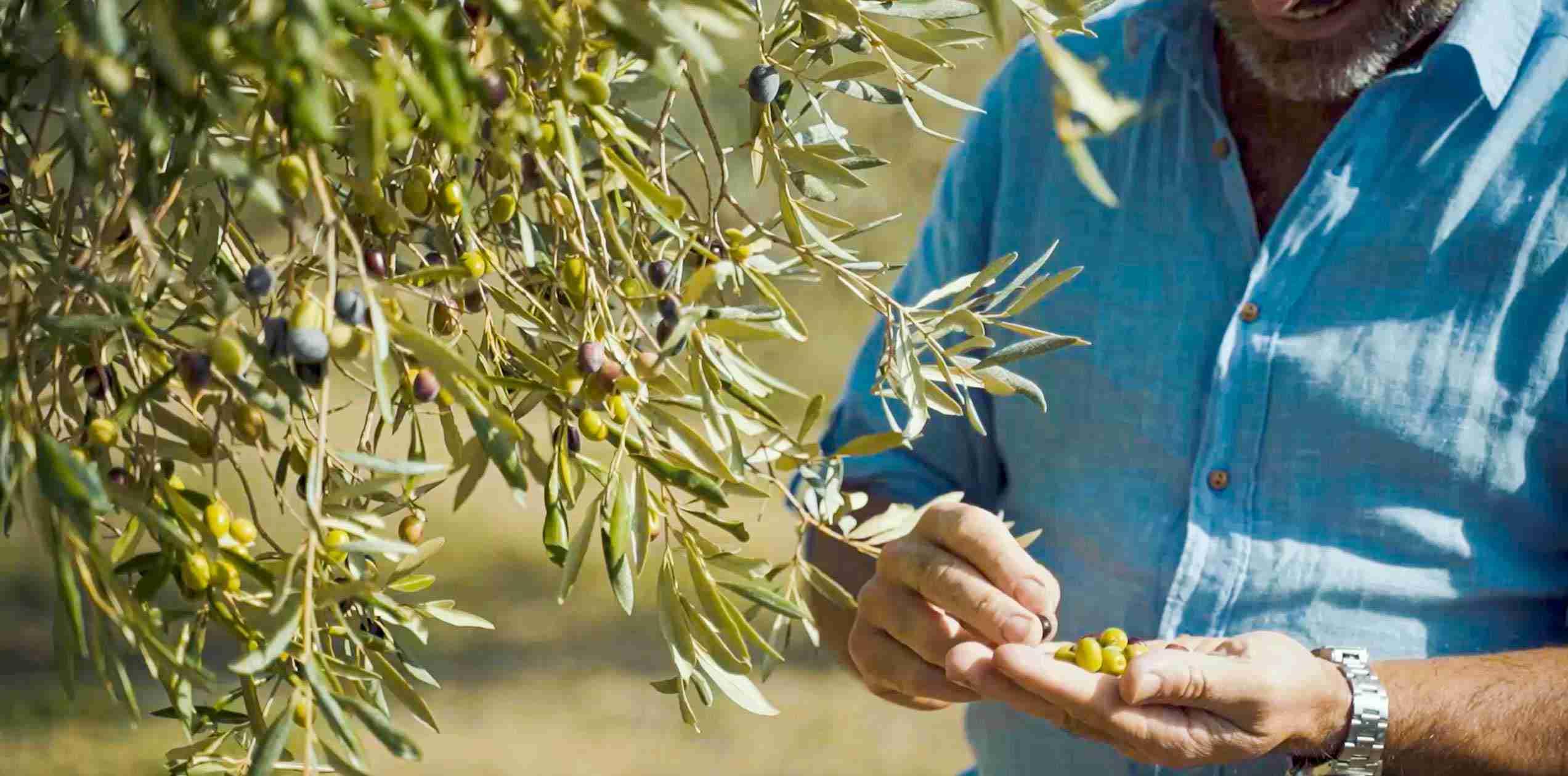 Why choose an Organic Extra Virgin Olive Oil?Olea Prilis
